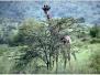 Kenya - Faune