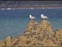 St Jacut de la Mer - Faune & Flore