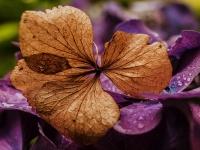 Orangerie_35