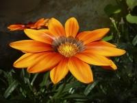 Orangerie_39