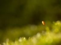 14-sporophyte
