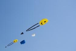 Cerrfs-volants à Berck