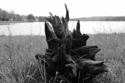 Les racines de Sévigné