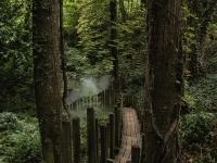 4 Chemin des brumes