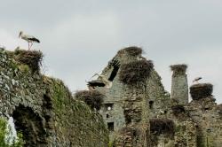 Château de la Rivière, Cigognes 25