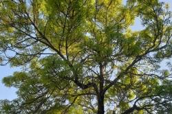 Béatrice C. - Un arbre avenue Robert Buron