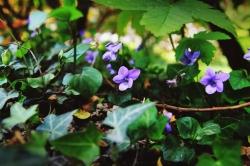 Amandine G. - Autour de moi il y a de jolies merveilles de la nature