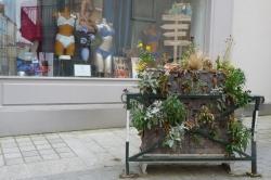 Anne-Marie B. - Fleurs abandonnées 30 avril 2020