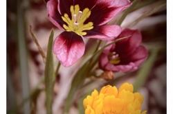 Dany-L.-Fleurs