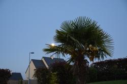 David J. - La Lune se pose sur le palmier