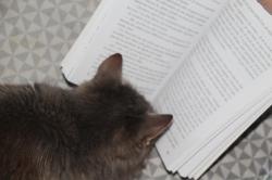 Julie C. - 3.et s'occuper à lire