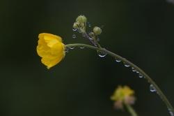 Maryvonne T. - Fleur triste