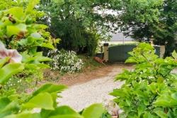Pierre B. - Chevreuil déconfiné dans mon jardin, ce jour, sans Attestation de déplacement dérogatoire