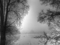 Un matin de brouillard