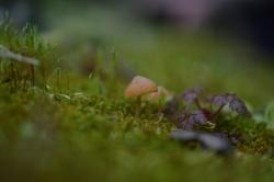 Champignons Miniatures