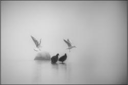 Brouillard-matinal