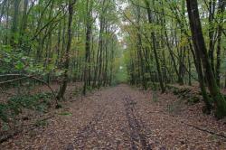 Alignements d'arbres aux couleurs de l'automne