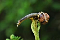L'Escargot Cascadeur