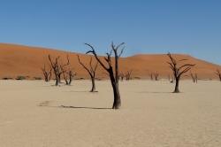 Régine J. - Dead Vlei..Namibie 01