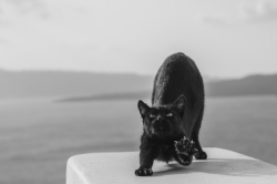 chat noir ville blanche