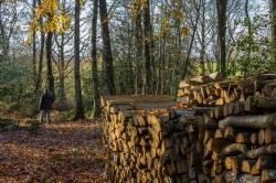 Du bois au bois