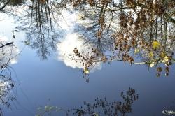 Effet de miroir sur la Mayenne