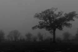 Dans la brume automnale