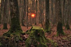 Matin en forêt