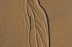 Qand la mer sculpte la plage en se retirant