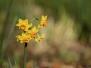 Petites fleurs de février