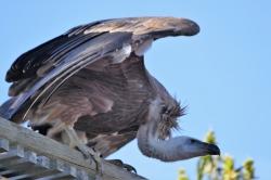 bal des oiseaux au Puy du Fou
