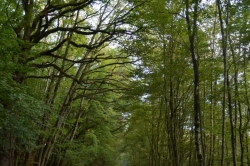 Chemin boisé sur la voie verte