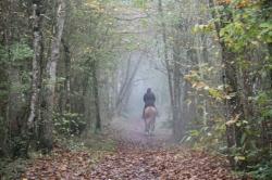 Allons nous promener dans les bois..