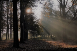 Le bois des Rochers Sévigné