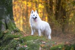 Loups des bois